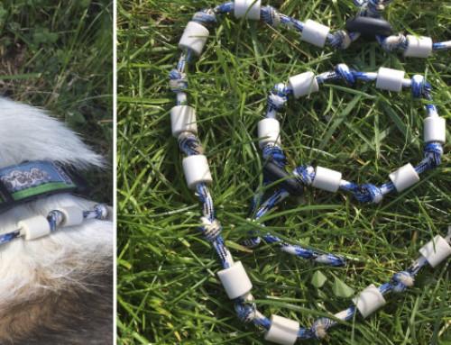 Neu im Shop: EM Keramik Hundehalsband zum Schutz vor Zecken